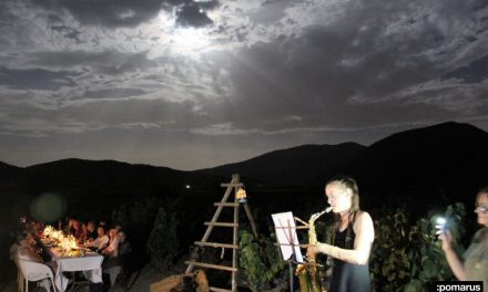Cena entre viñedos a la luz de la luna