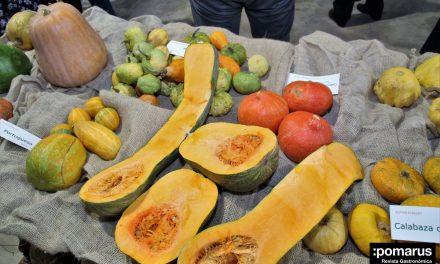 Jornada de exposición y valorización gastronómica de variedades tradicionales de la calabaza y el calabacín, en el IMIDA