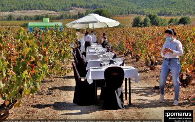 Maravillosa Comida Entre Viñedos en el Valle del Aceniche